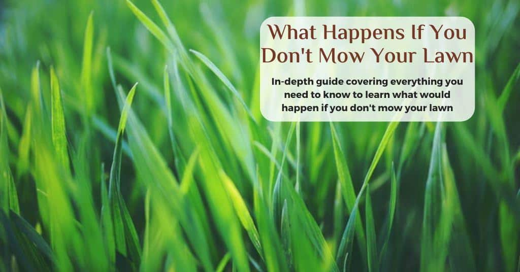 what would happens if you don't mow your lawn