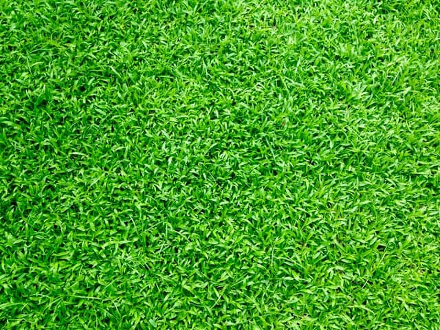 benefits of mowing lawn